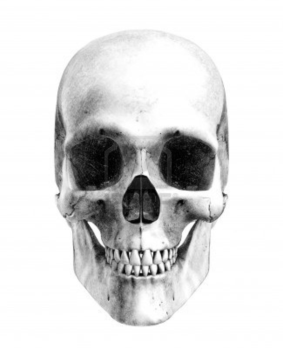 11563121 human skullfront view pencil drawing stylethis is a 3d 100 desenhos de caveira 11563121 human skull front view pencil drawing stylethis is a 3d render the pencil effect was achieved by ccuart Images
