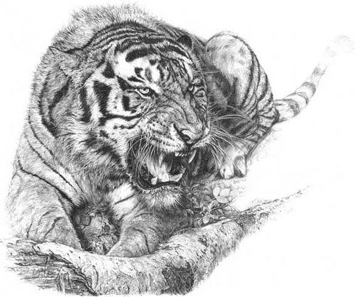 100 desenhos de tigres aido bonsai