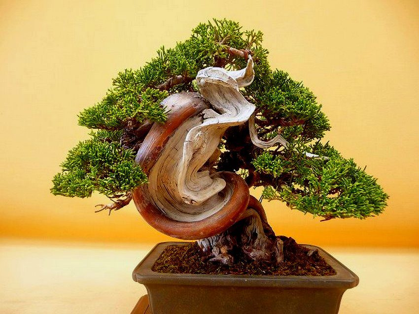 387017 478289312181749 487956794 n aido bonsai for Como cultivar bonsais