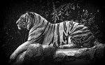 Animals-HD-Wallpaper-Royal-Bengal-tiger