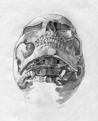 anteriorinfetior skull