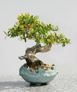 bonsaigarten_lb5