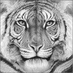 Majesty_tiger_eyes_head_gary_hodges