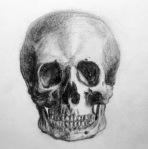 pencil-drawing-of-a-skull