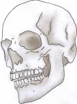 shaded-skull-photo