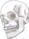 shaded-skull-photo