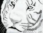 Tiger-drawing-8077155-600-475