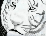 Tiger-drawing-8077155-600-475