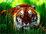 Tiger Wallpaper11