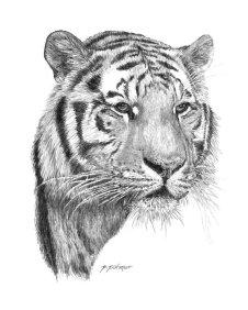tiger_by_austin_animal_art-d2yu23h