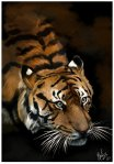 tiger_painting__by_loveaddictx3-d33a6t7.png