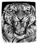 tiger_sketch_2_by_sabbathsoul-d35cc7t
