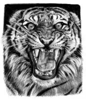 tiger_sketch_2_by_sabbathsoul-d35cc7t