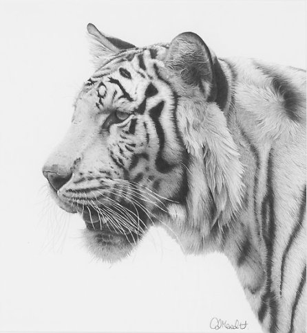 work.4231856.2.flat,550x550,075,f.white-tiger