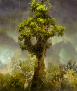 4420-forest-80d-44x38-72x62-83x71-20071