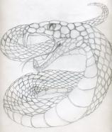 snake_sketch_by_swordman16-d2yv3ps