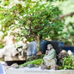 O monge e o chá Espécie : Pithecolobium thortum