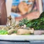 Meditação Espécie: Eleagnus